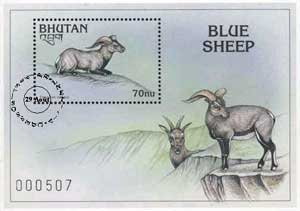 Bhutanese Blue Sheep